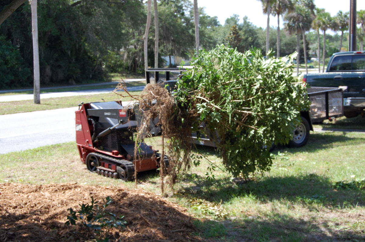 Image result for shrub removal images